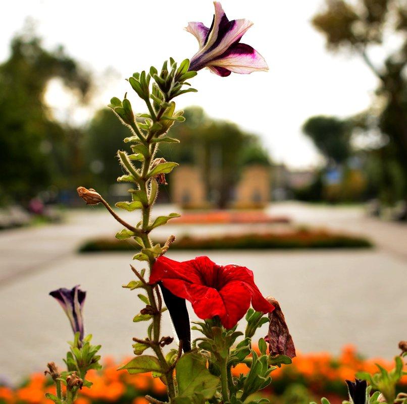 Парковые цветы - Евгений
