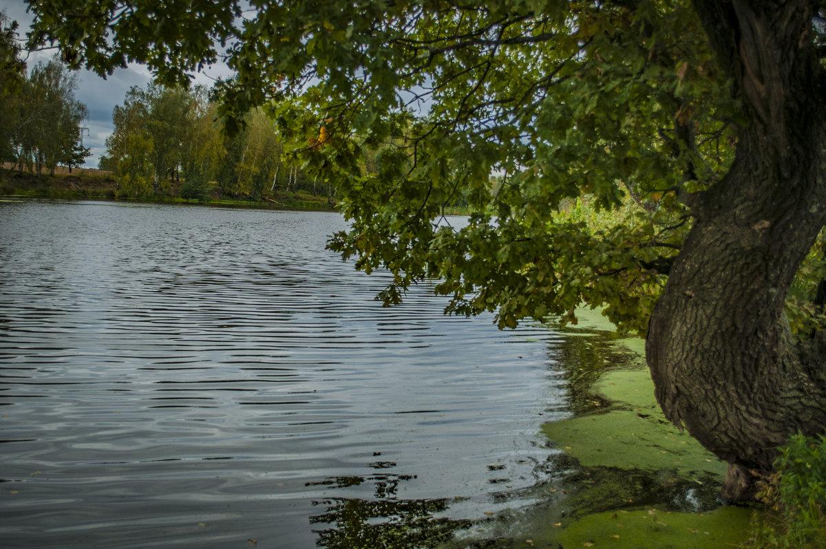Дуб у озера - Андрей