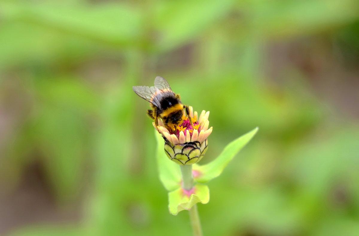 Пчелка - Марина Романова
