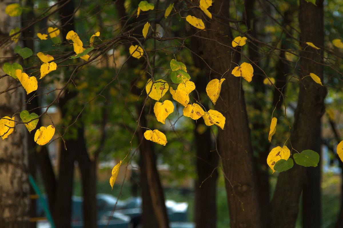 Осенняя зарисовка - Ольга
