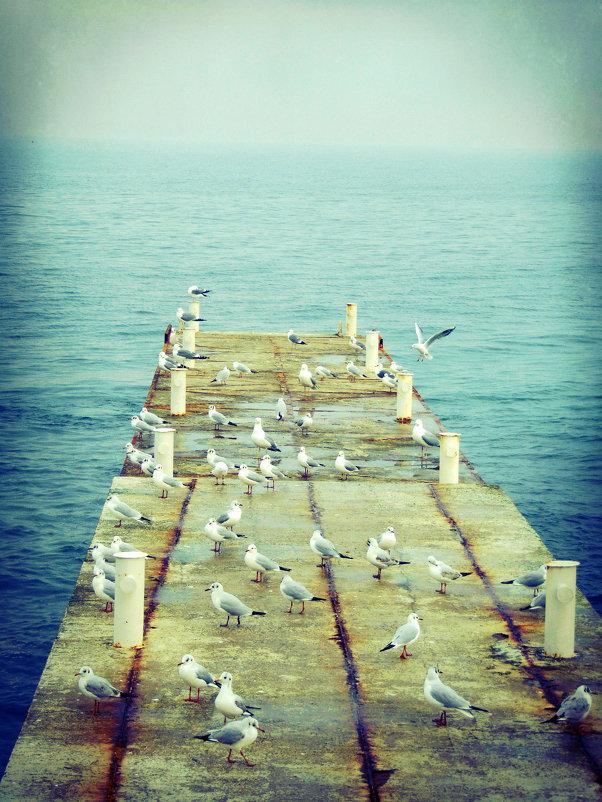 Чайки і море - Таня