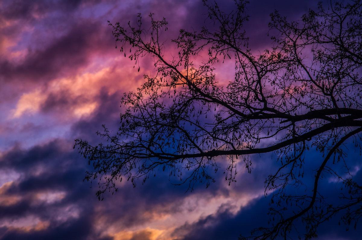 дерево на закате - Ксения смирнова