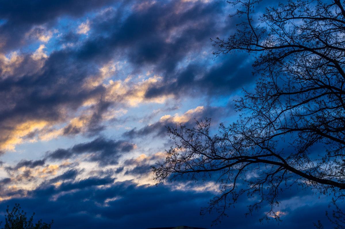 утро.....и дерево - Ксения смирнова