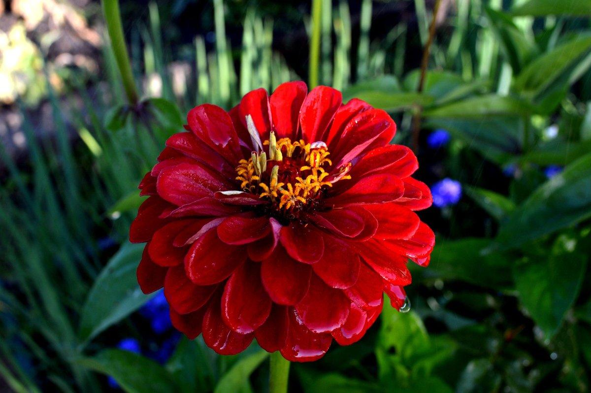 цветы - AlerT-STM 1
