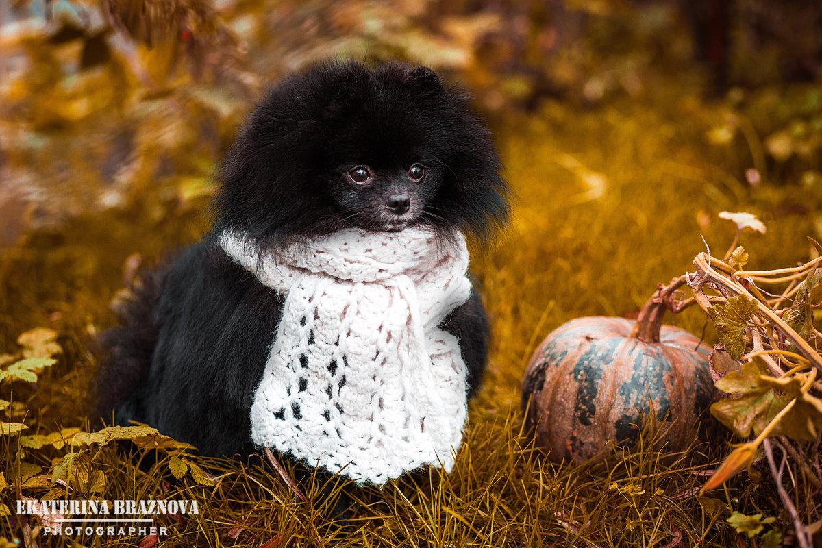 Осень - не повод грустить.  - Екатерина Бражнова