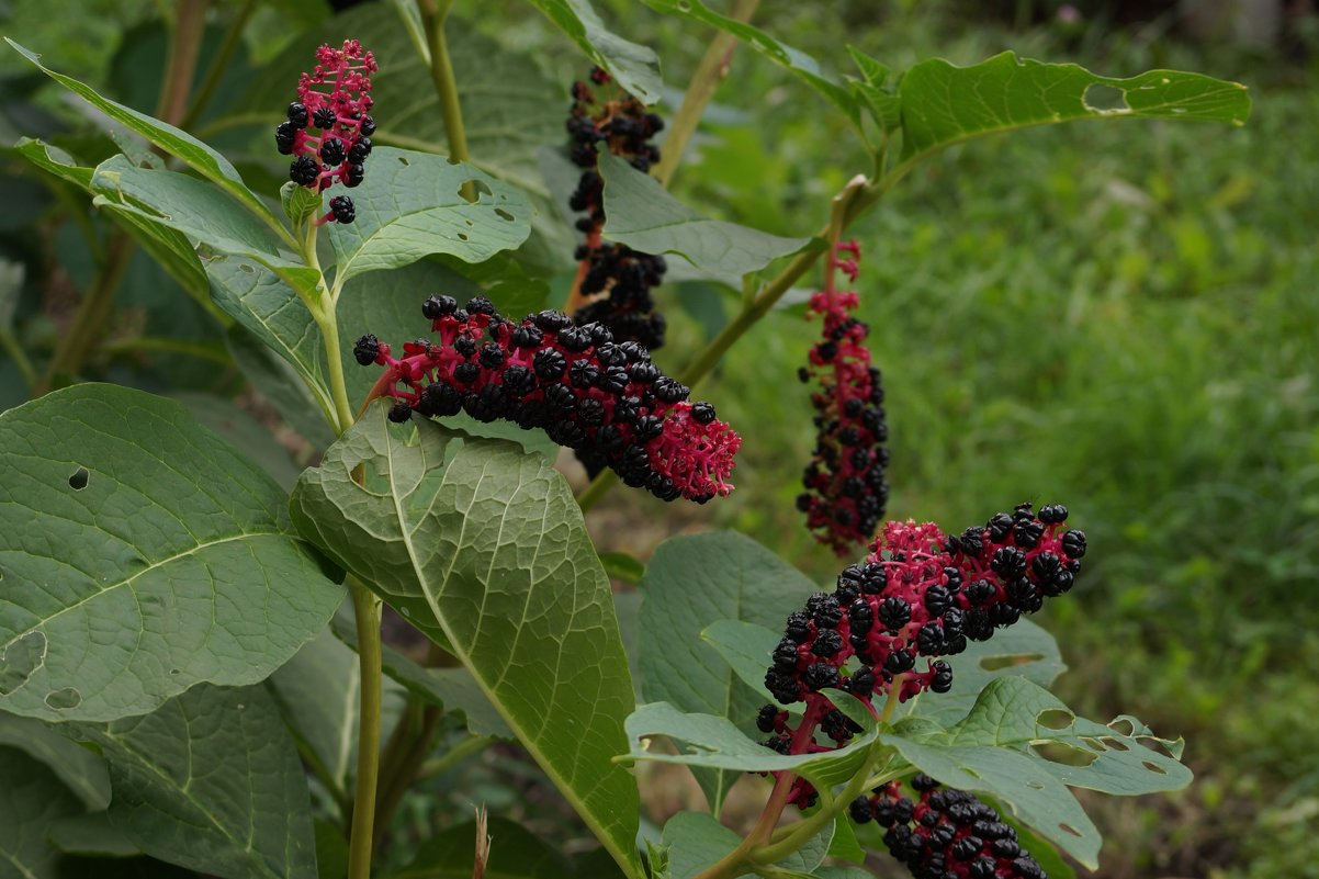 Неизвестное растение - София