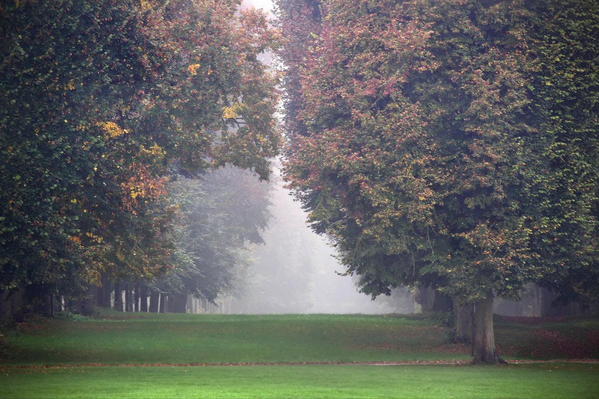 Аллея целующихся деревьев - Юрий Кольцов