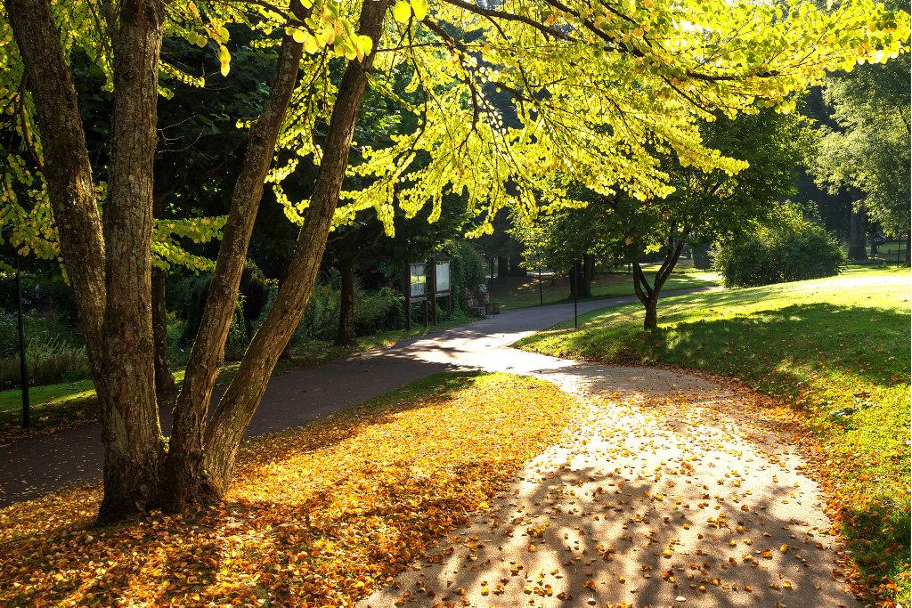 Осень - Андрей Агешин