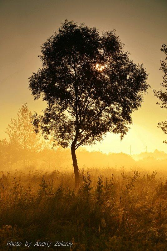 На рассвете... - Андрей Зелёный