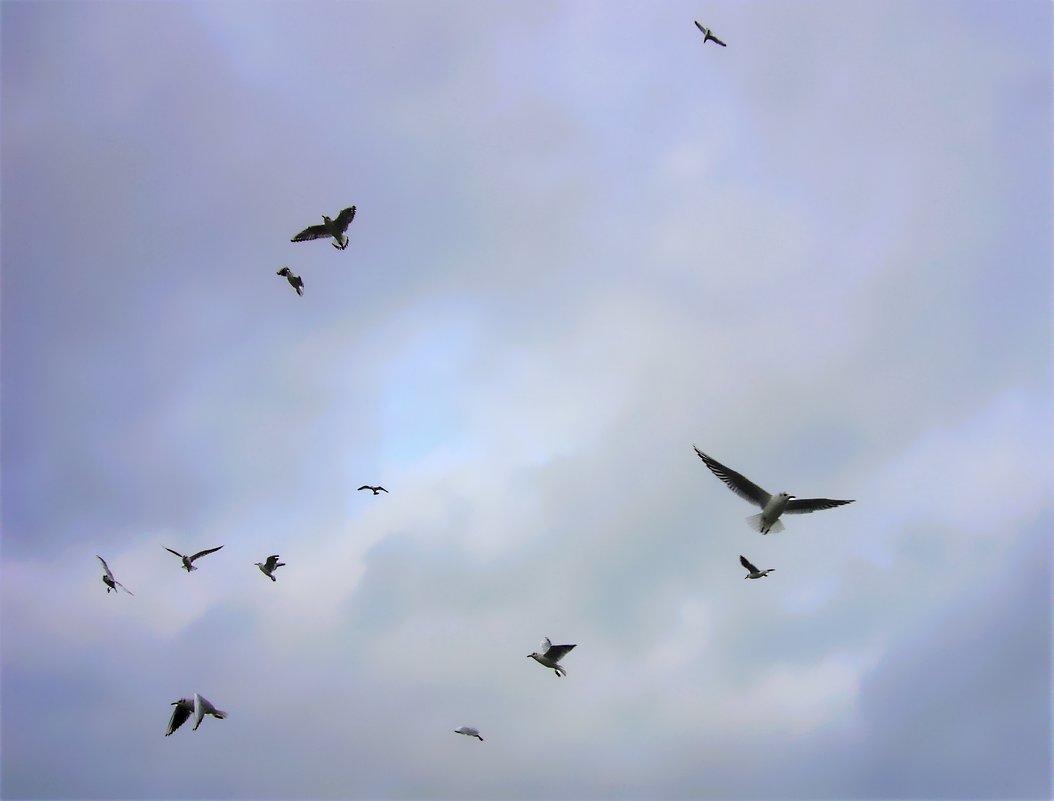 Распрямляя крылья - Валерий Розенталь