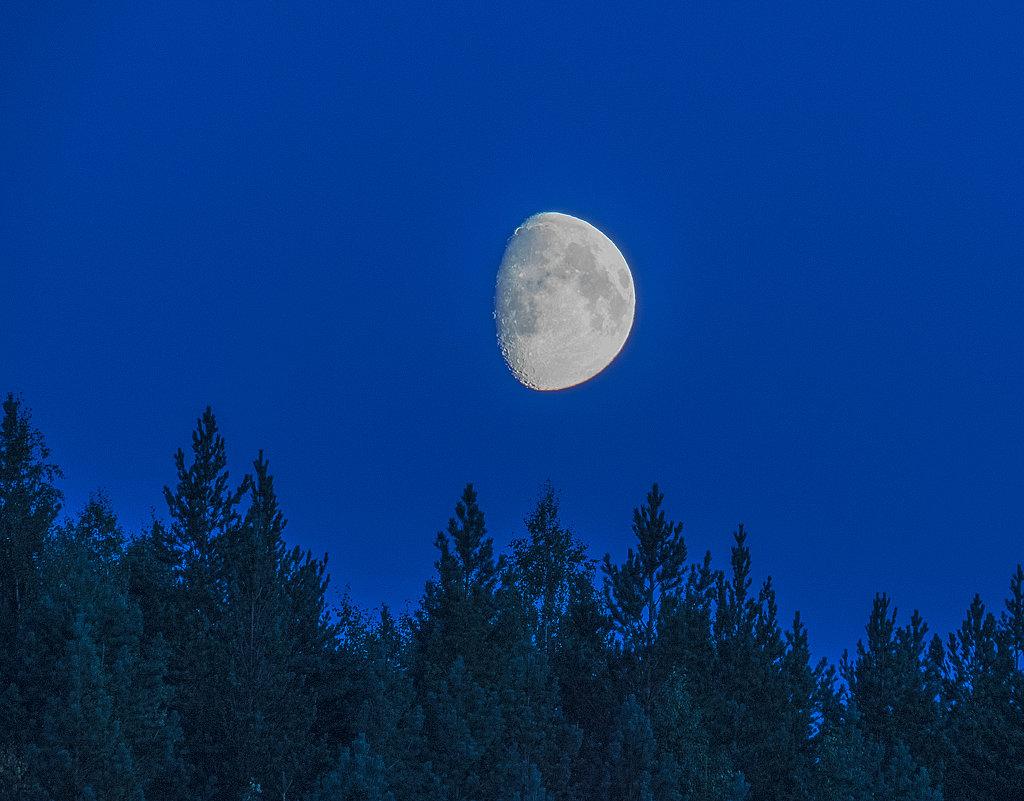 Северная луна в августе - Алена Малыгина