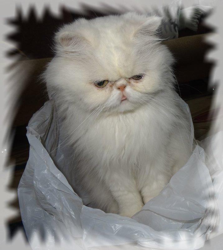 Я - пушистый, беленький котенок. - Чария Зоя