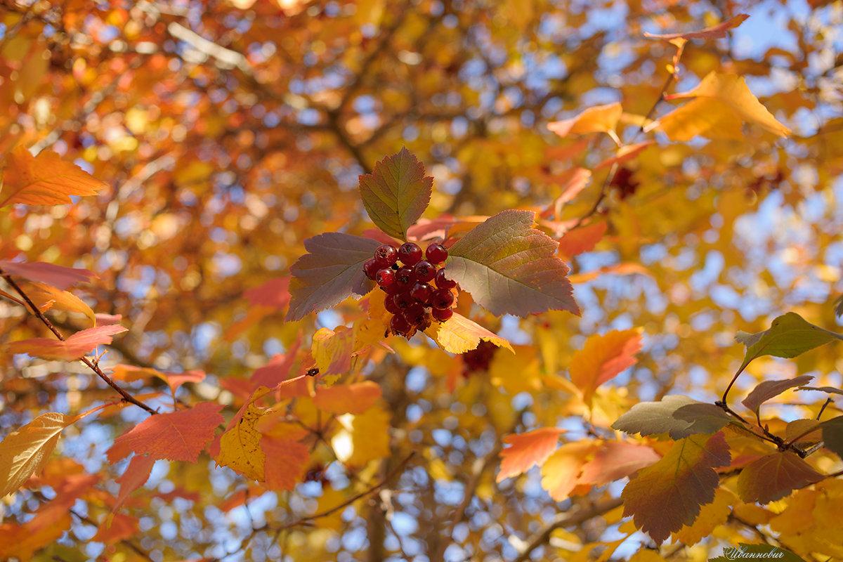 Осень - Иваннович *