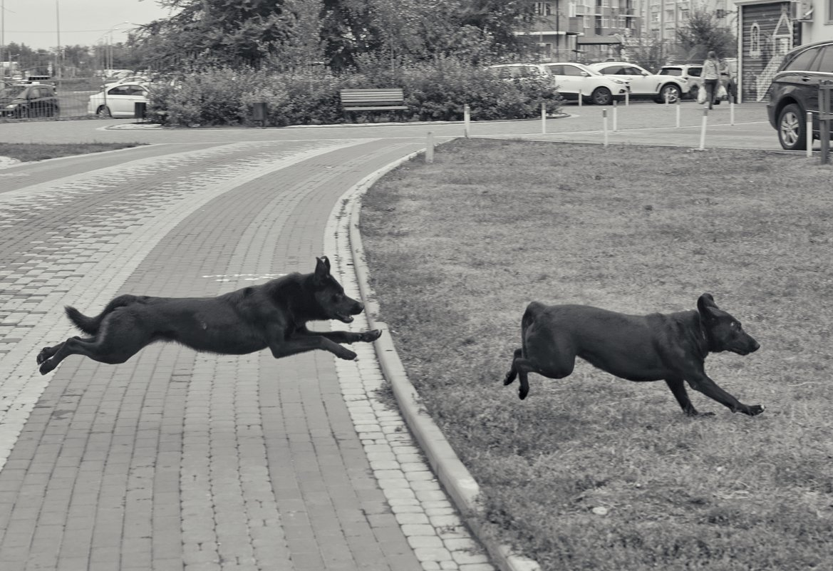 В полете за пробежавшим котом - Андрей Майоров