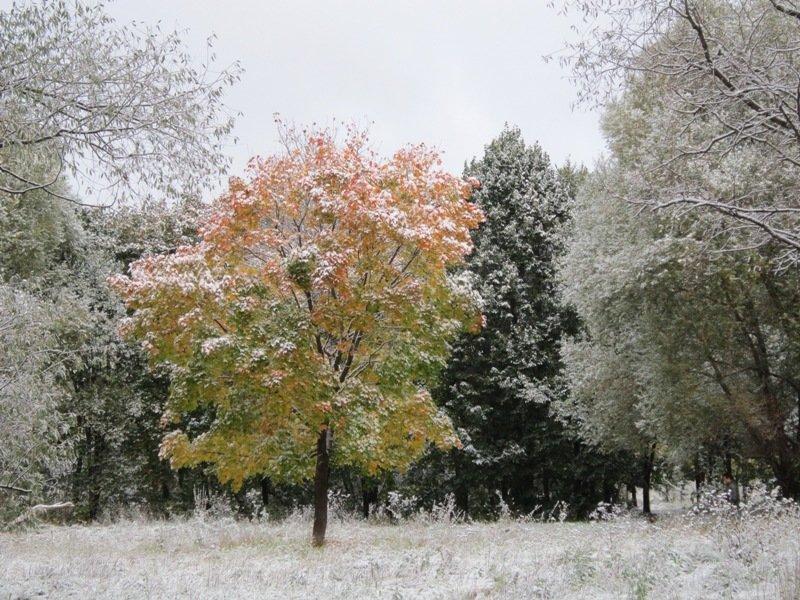 9 октября 2015 года. Первый снег - Дмитрий Никитин