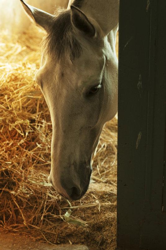 Лошадь - Виктория Велес