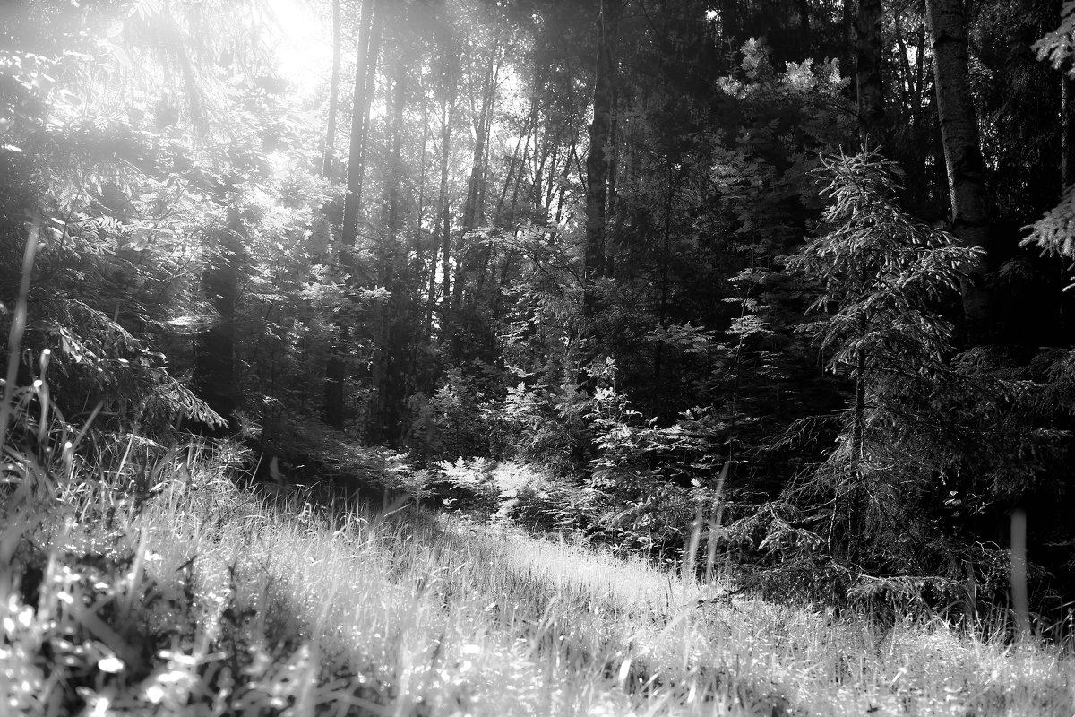 Солнышко в лесу. - Андрей