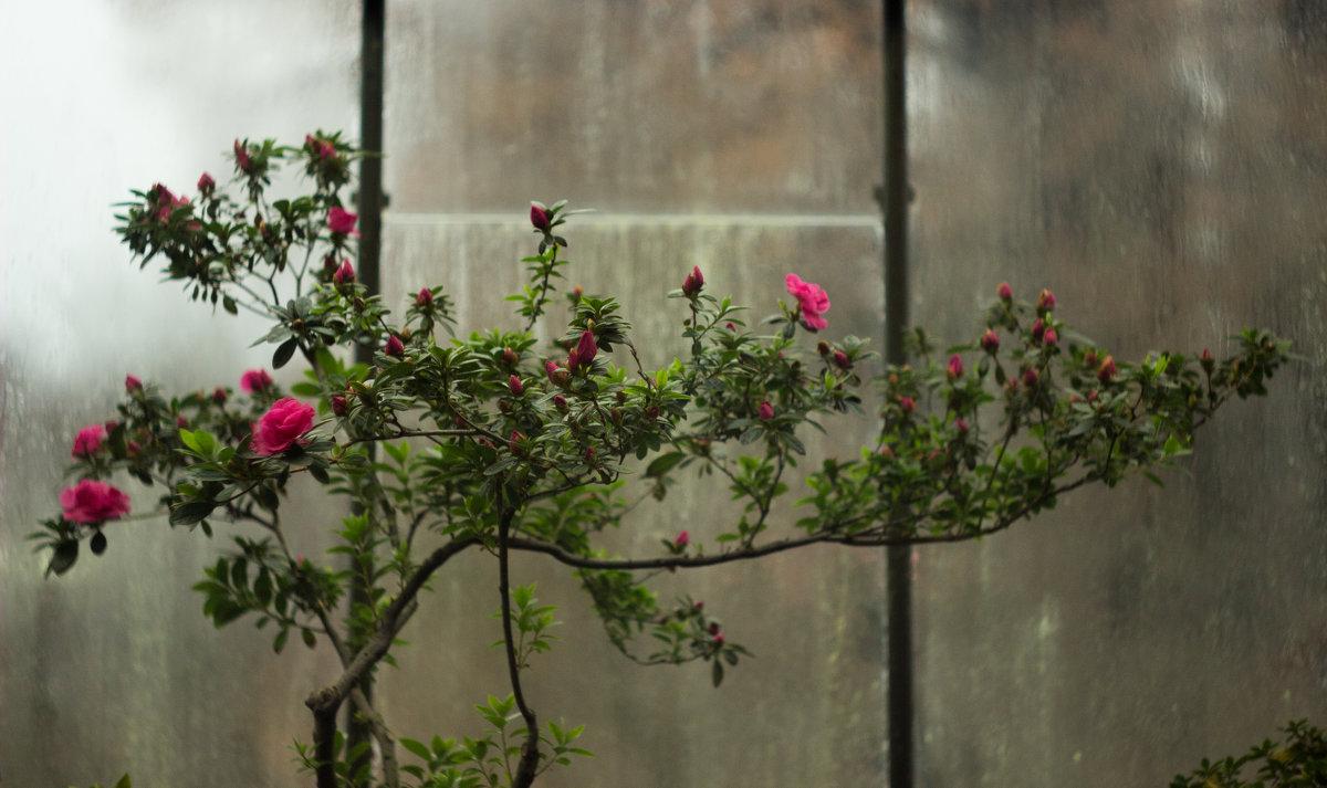 Ботаника - Ketrin Darm