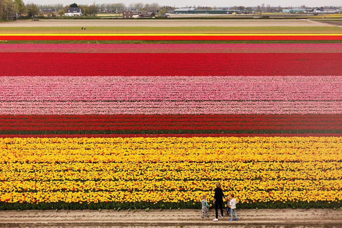 Голландия весной - Эльвира Лопатина