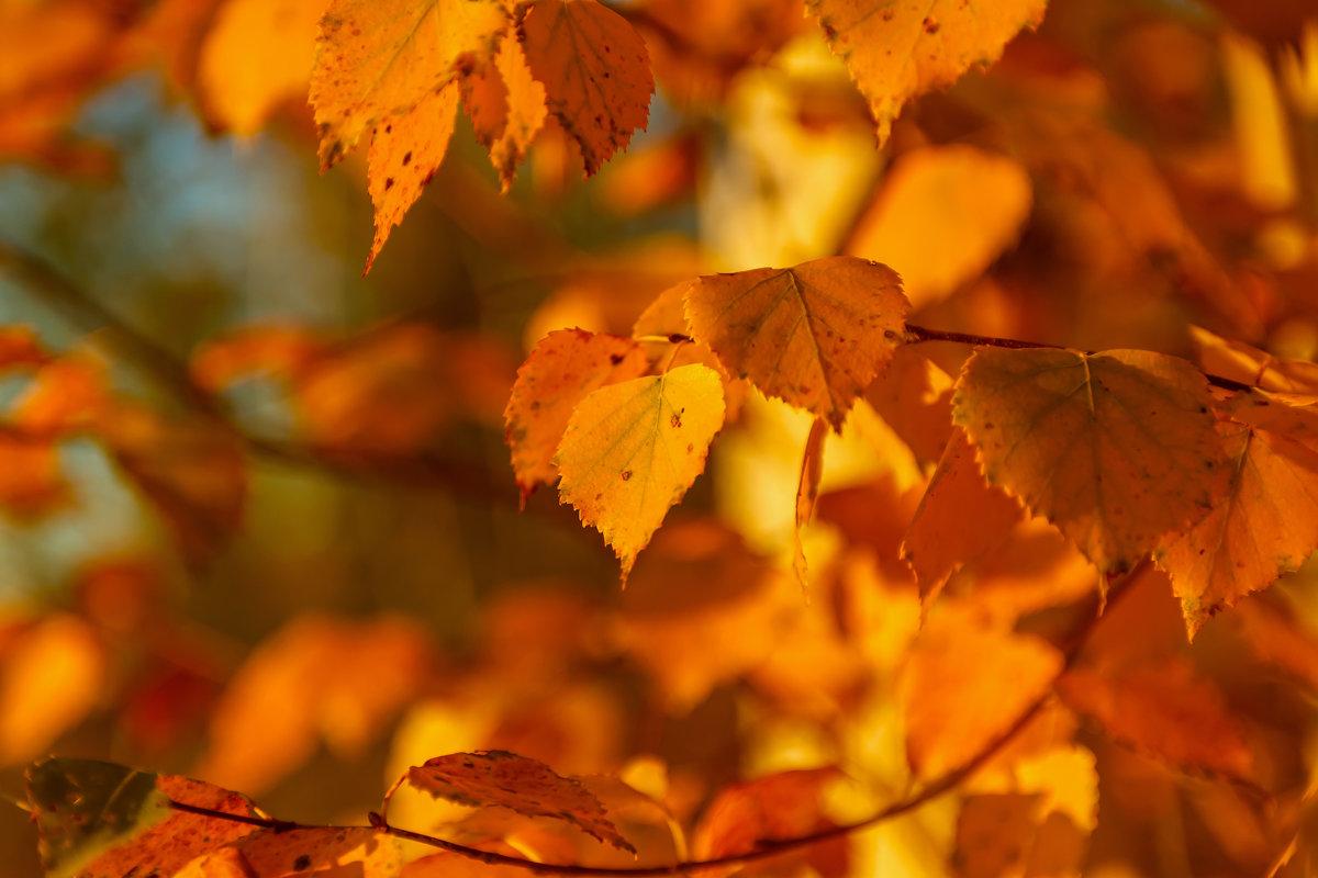 листья осени - Сергей Сол