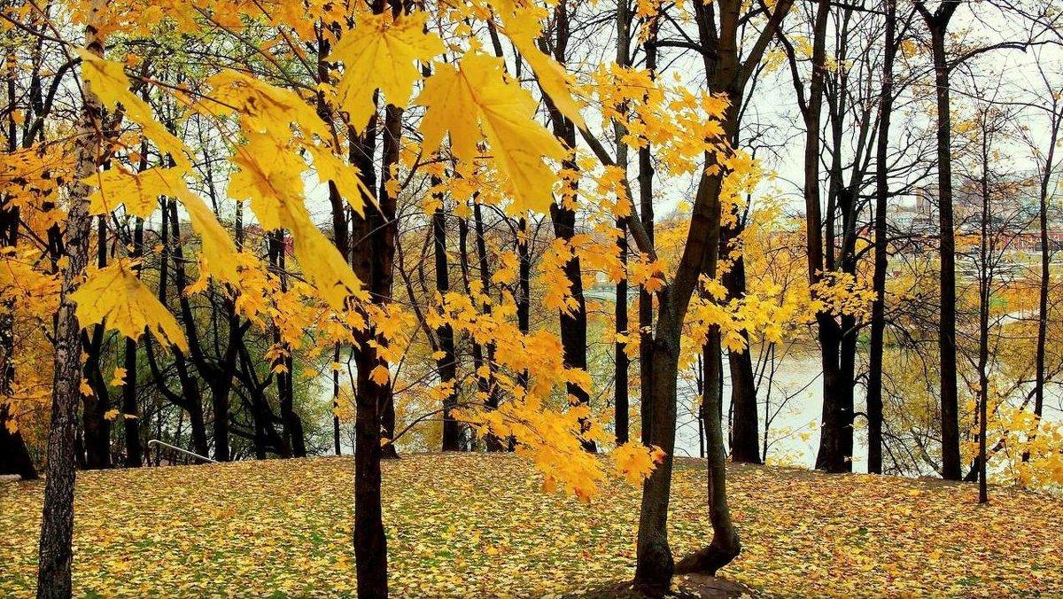 Осенний мотив - Надежда Бахолдина