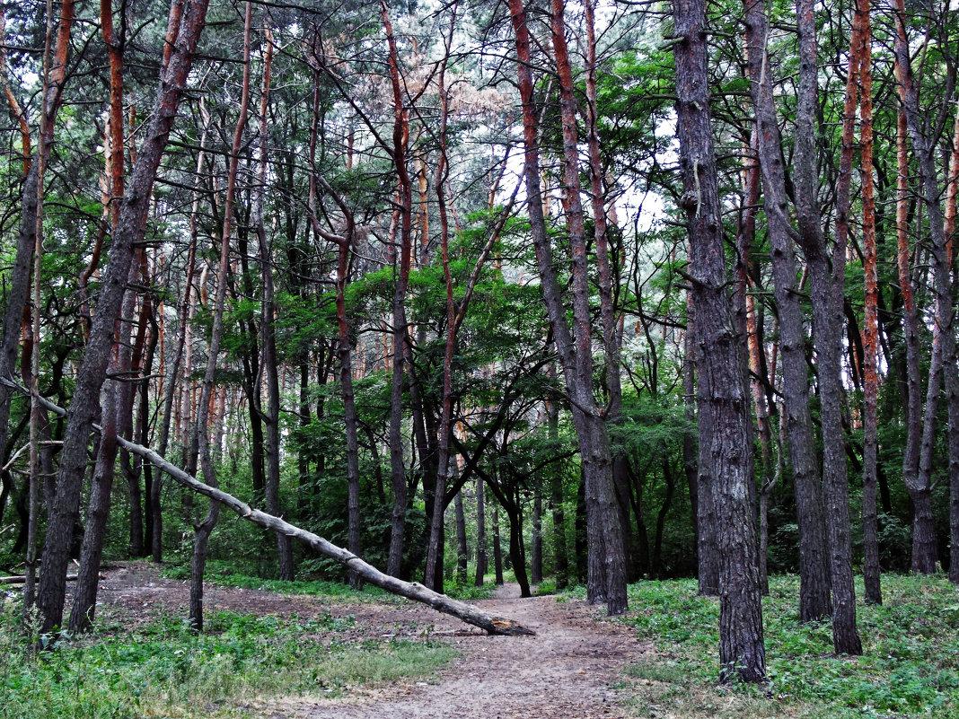 прогулка по лесу - лиана алексеева