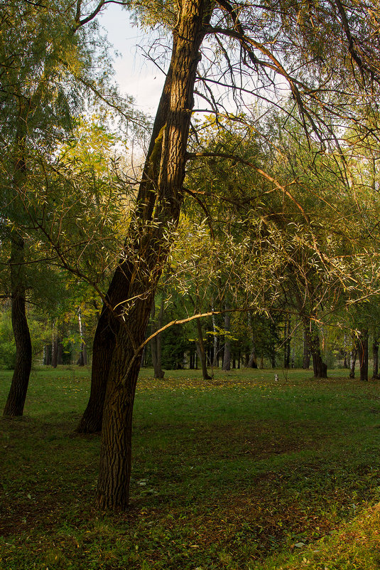 Вечер в Ботаническом саду - Ольга