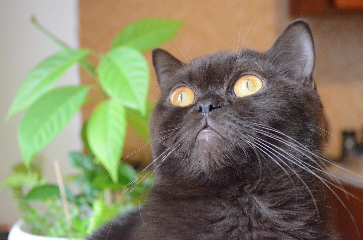 волшебный взгляд - Ольга