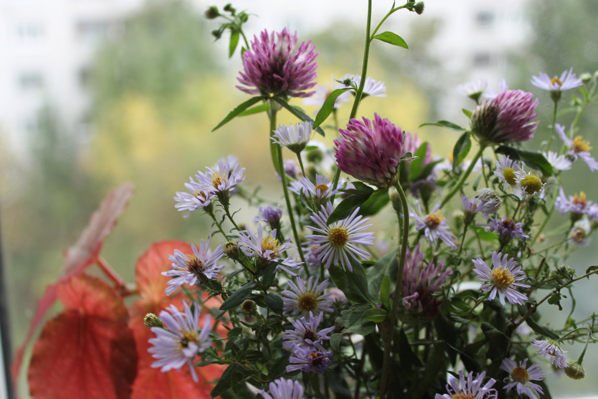 Цветы осени - Калмакова Марина