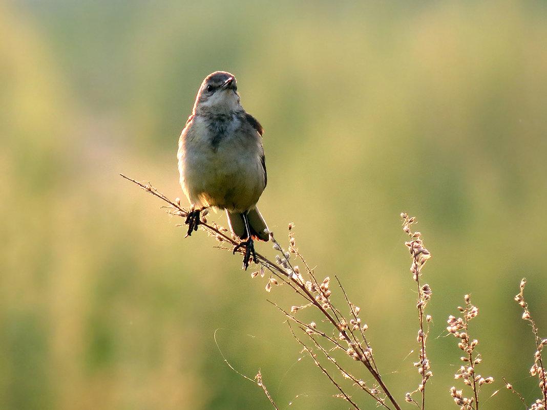 Пташка ранняя - Екатерина Торганская