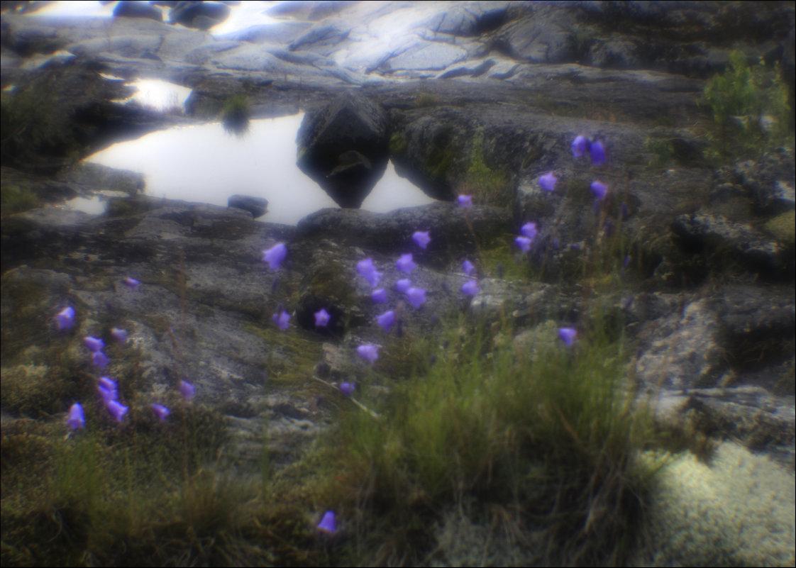 И на камнях растут цветы - galina bronnikova