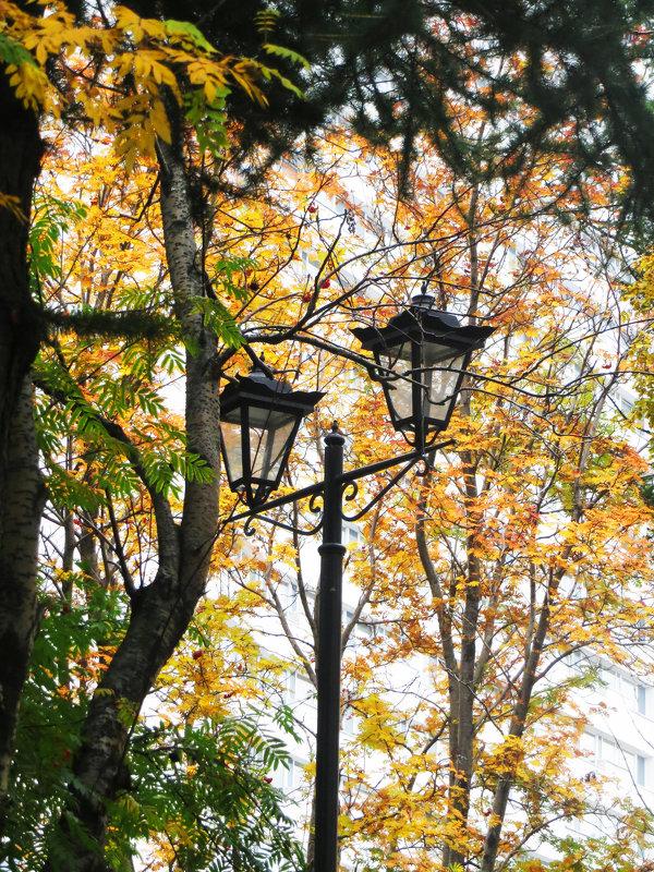 От фонаря, что здесь неподалёку С клочком зелёной и светящейся листвы.... - Анна Приходько
