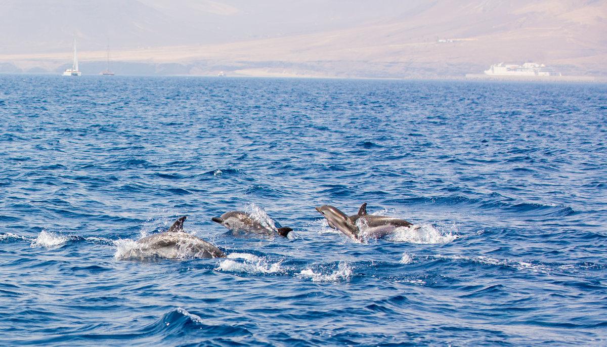 Дельфины Атлантики - Viktor Schwindt