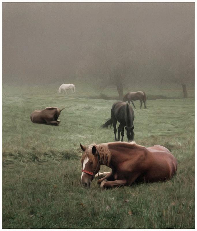 лошади - Татьяна Найдёнова