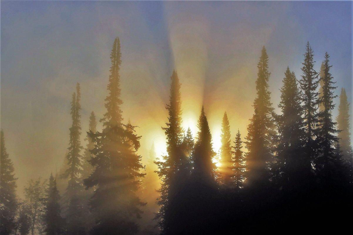 Солнце пробило утренний туман - Сергей Чиняев