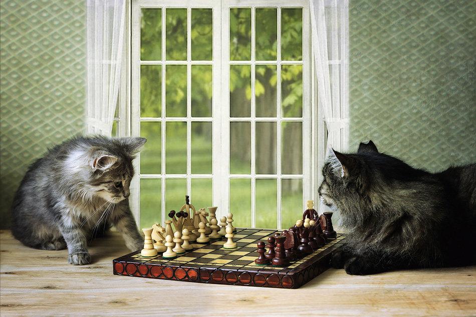 Шахматисты - Ирина Приходько