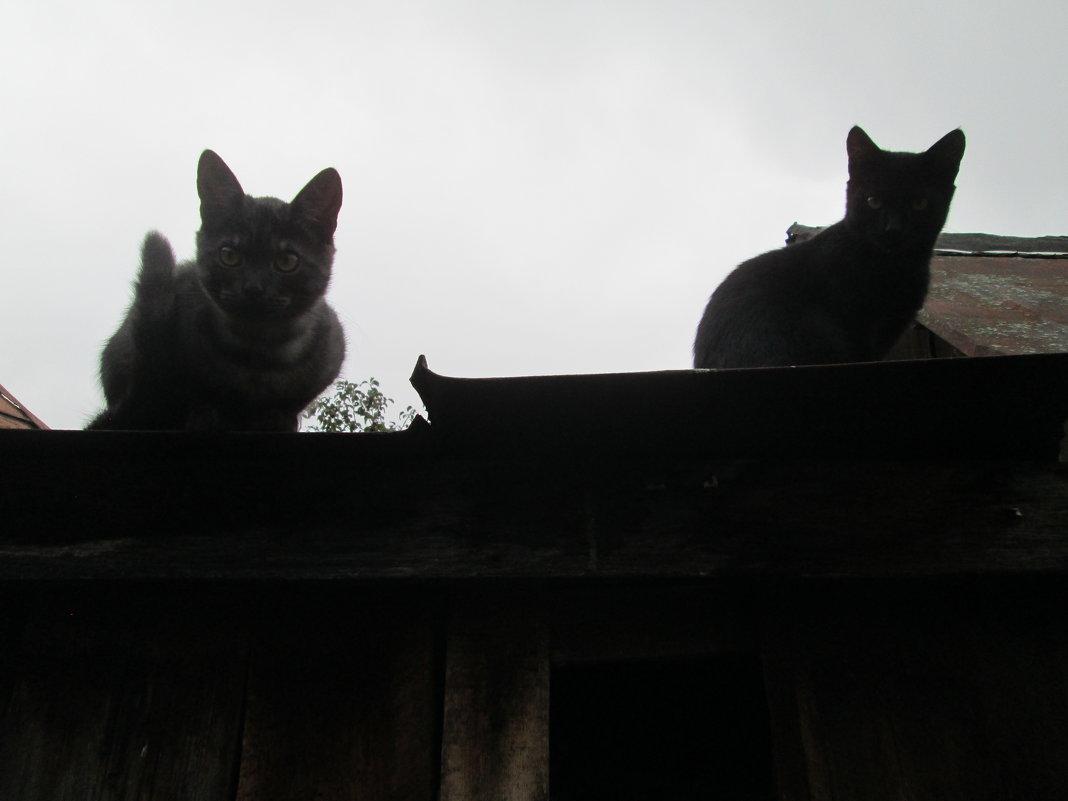Кошачий спецназ - Любовь Игнатова
