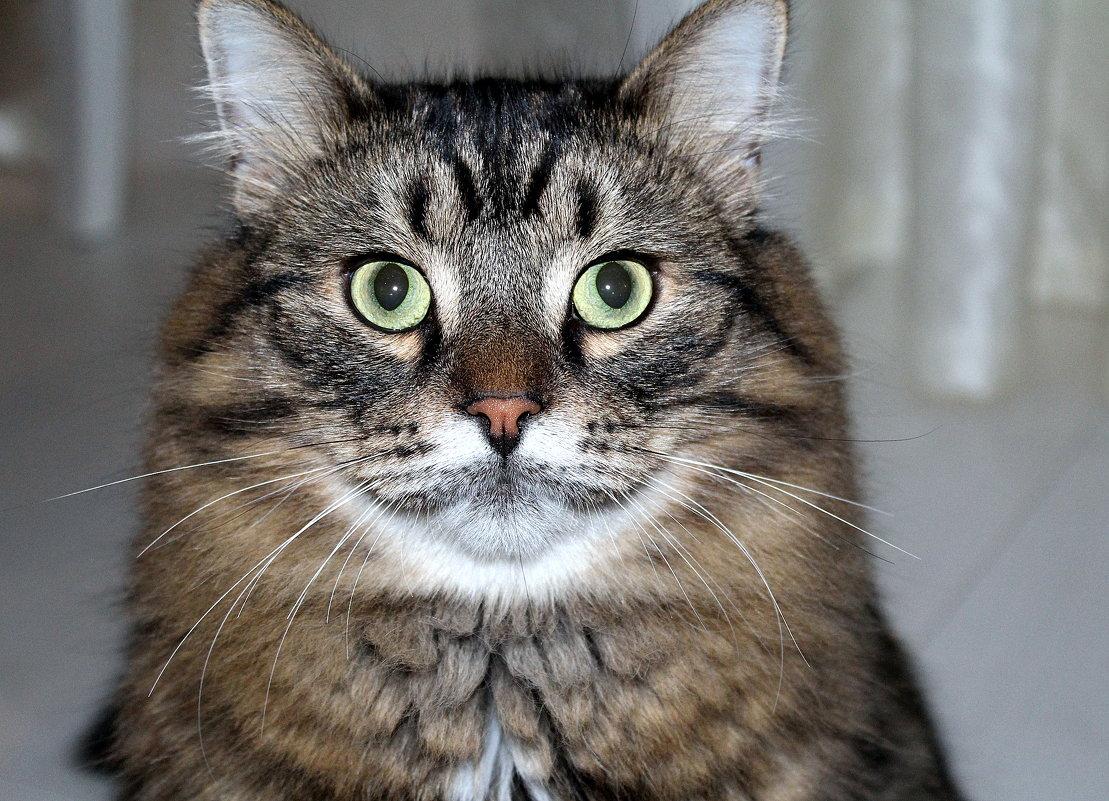 Питерский кот Веня - Marina Pavlova