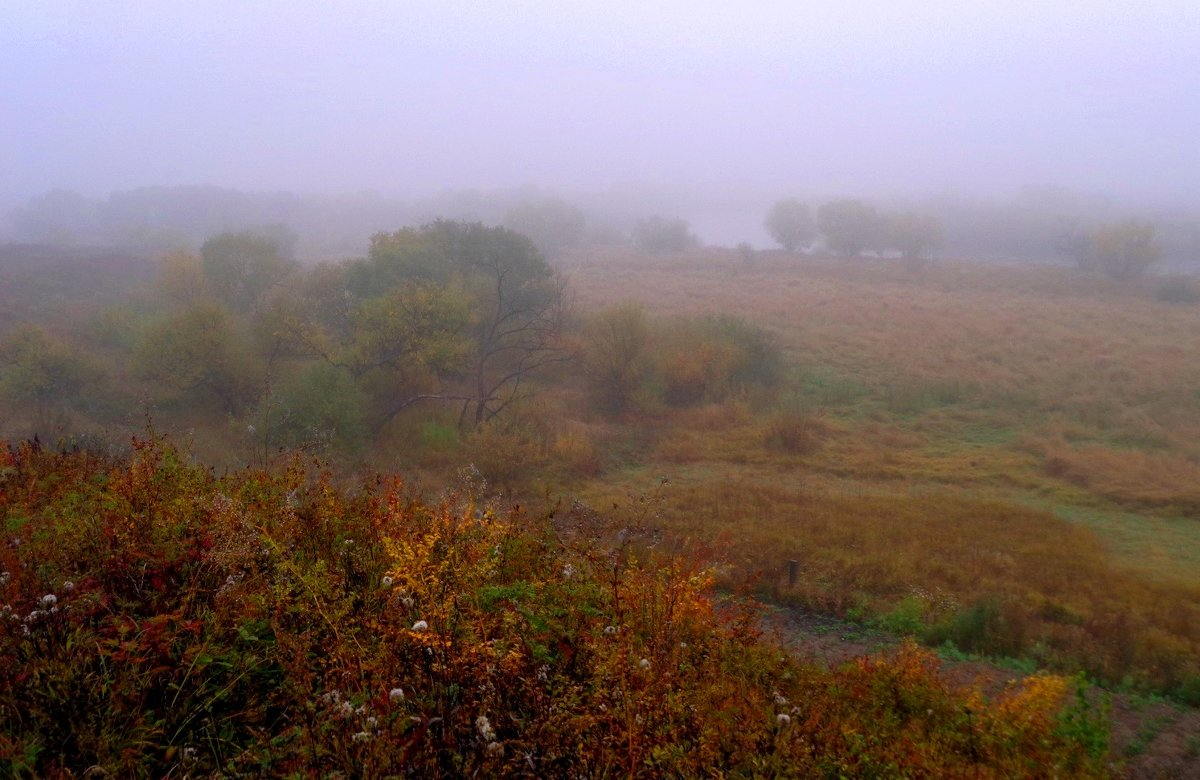 Туман в долине реки - Милла Корн