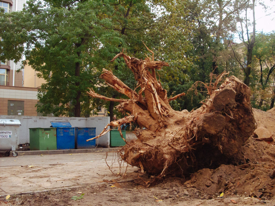 Корень большого дерева - Никола Н