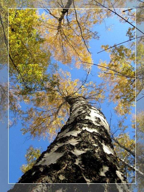 Осенняя высь - Мария Богуславская