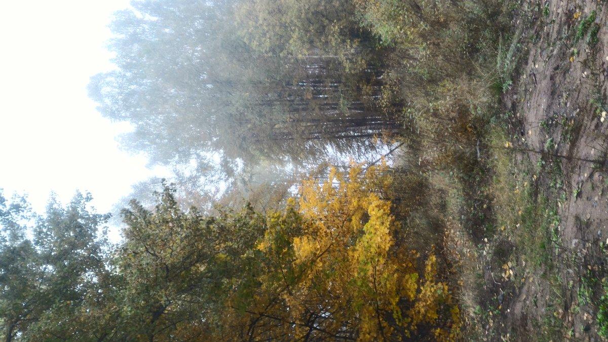 Туман лесной - Дмитрий