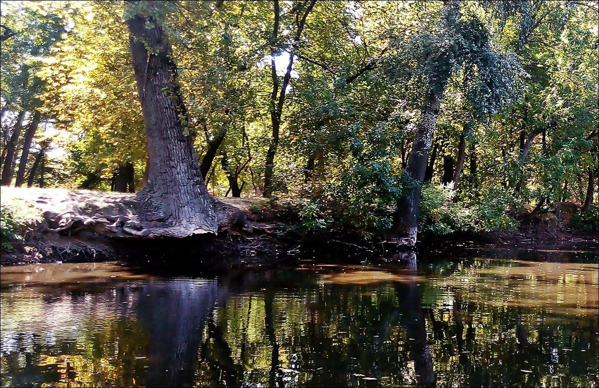В старом парке - Нина Корешкова