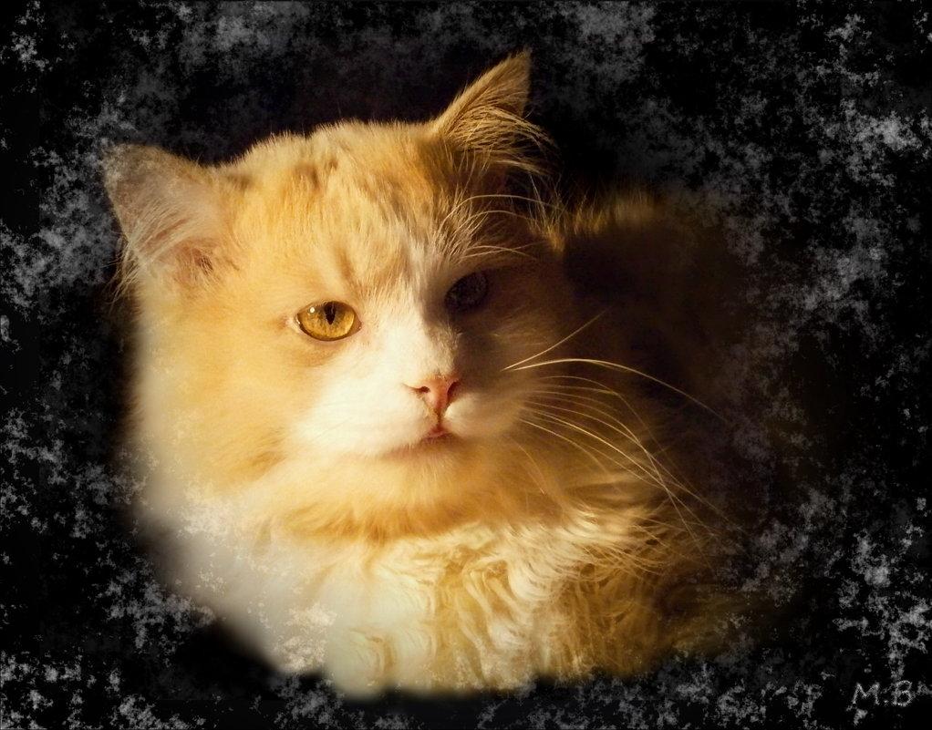 Ночью с улицы ко мне зайдёт -  А вернее с крыши – рыжий кот. - Людмила Богданова (Скачко)