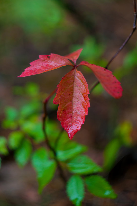 Осень начинается - Albina