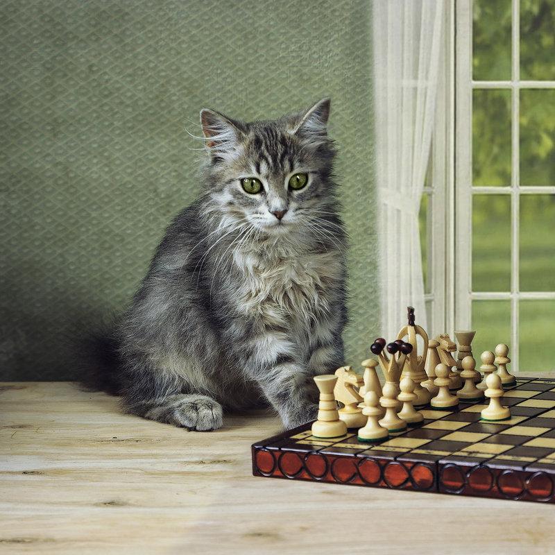 Масяня шахматистка - Ирина Приходько