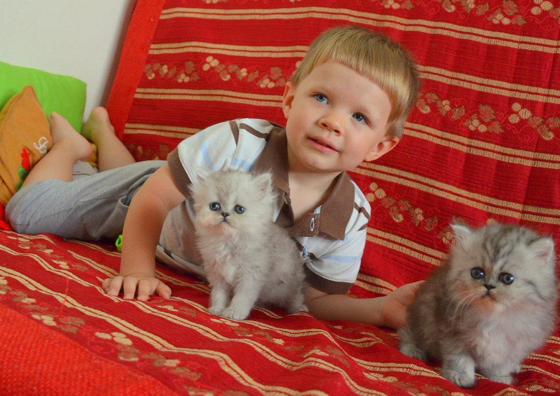Котики все во внимании. - Оля Богданович