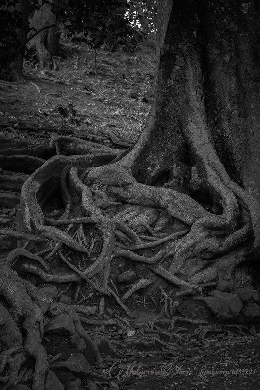 корневище - юрий мотырев