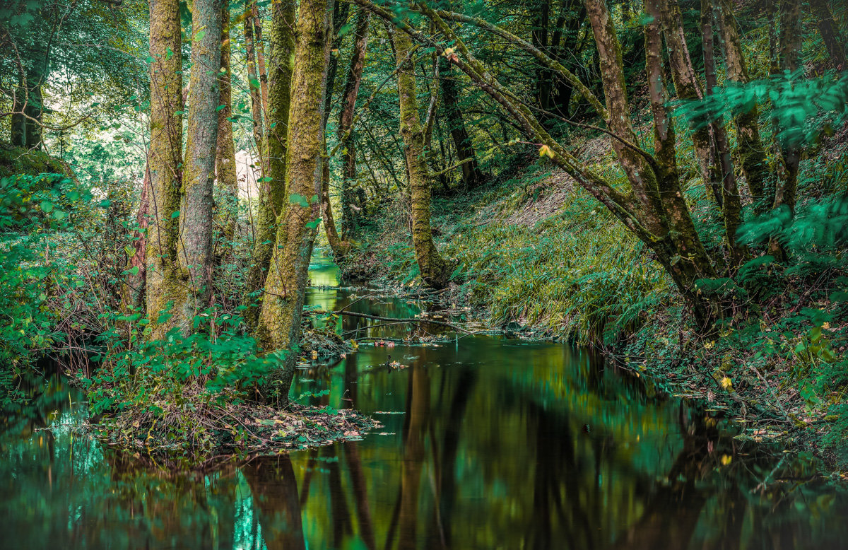 Ручей в лесу... - juriy luskin
