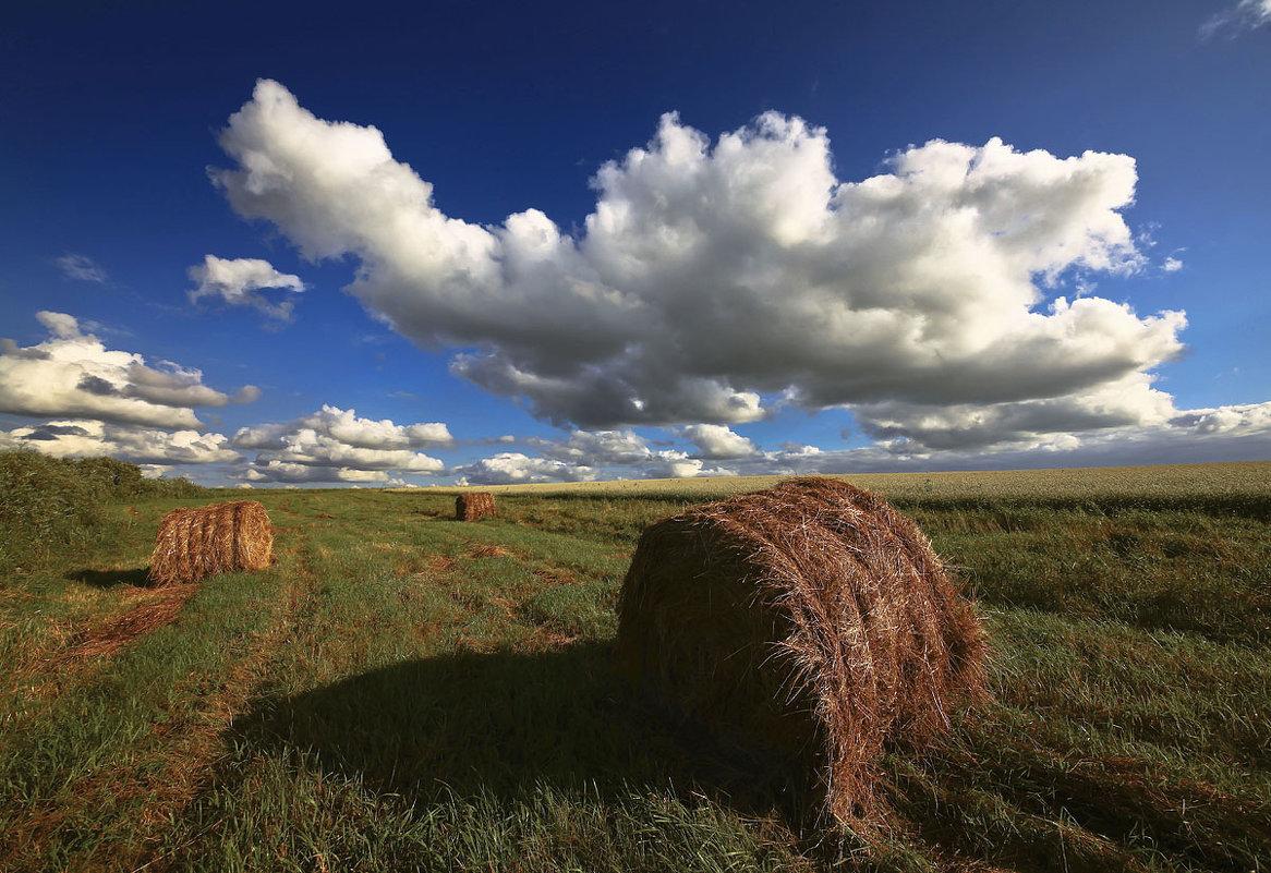 Скошеные травы, сена жёлтые валки - Сергей Жуков